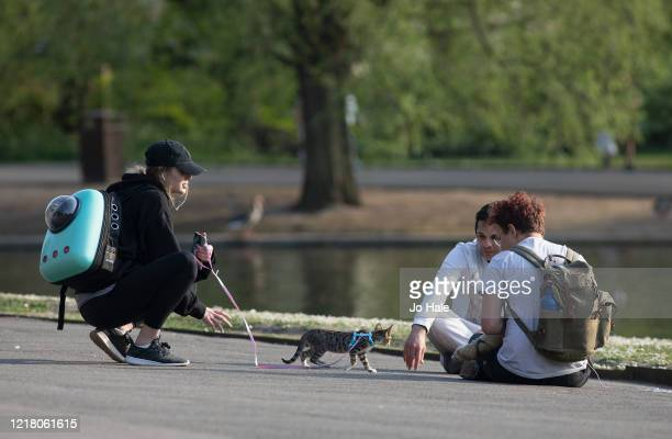 Three friends meet with their pets, a kitten and a ferret, both on leads in Regents Park, Good Friday on April 10, 2020 in London. There have been...
