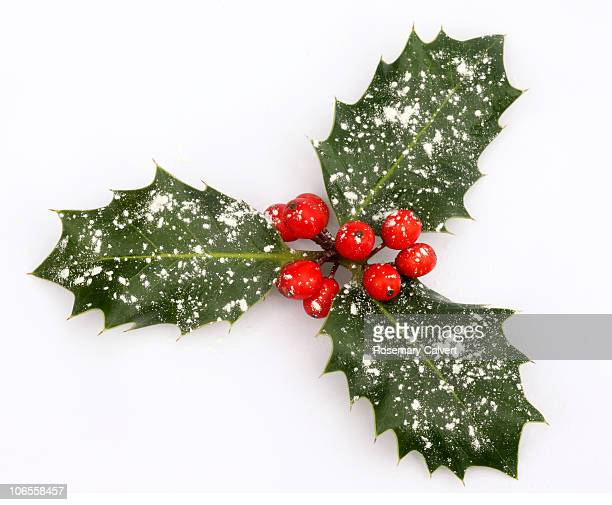 Three frosted holly leaves with red berries.