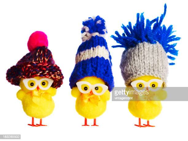 Three funny chicks wearing winter hats
