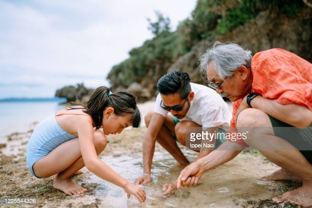 three generation family playing in tide pool, japan - ippei naoi stock pictures, royalty-free photos & images