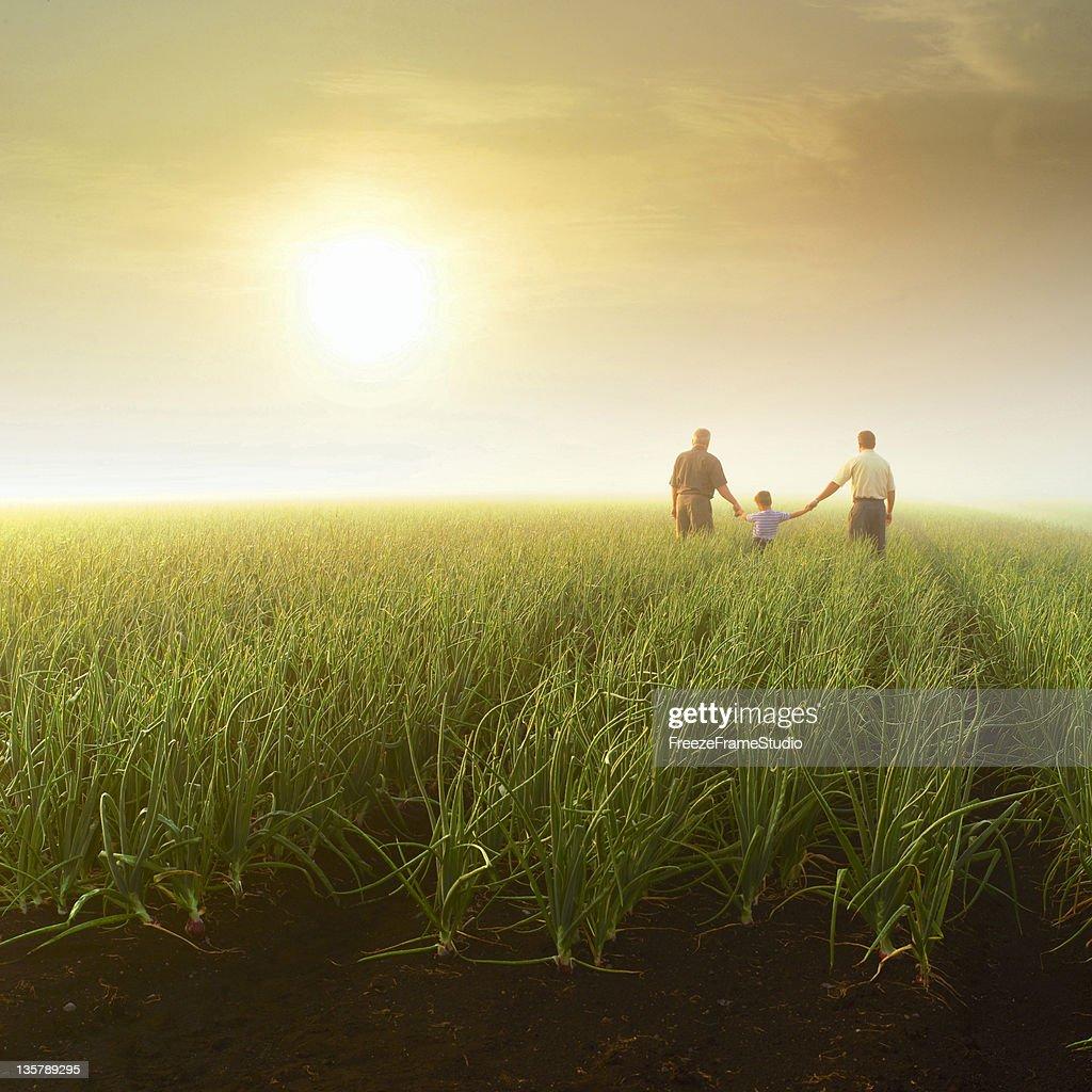 Três gerações (avô, filho e neto), segurando as mãos em farm campo : Foto de stock