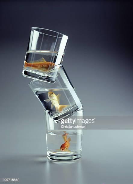 3 つの金魚のスタック式ガラス製のカップ - 抑える ストックフォトと画像