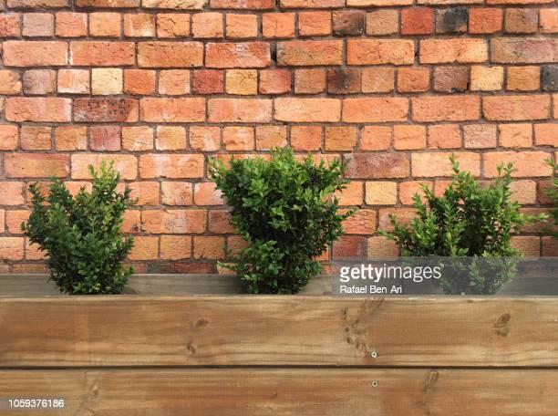 three green plants in a raised garden bed - rafael ben ari stockfoto's en -beelden