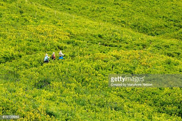 three hikers in corn lilies - カリフォルニアバイケイソウ ストックフォトと画像