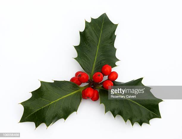 three holly leaves with red berries. - holly stock pictures, royalty-free photos & images