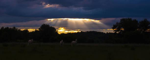 Three horses grazing under clouds pierced by sunlight at dusk, Assas, Canton of Saint-Gely-du-Fesc, France