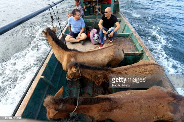 Three horses on board a boat going back to the mainland after they were rescued from the ground zero of volcano island that a major residents and...