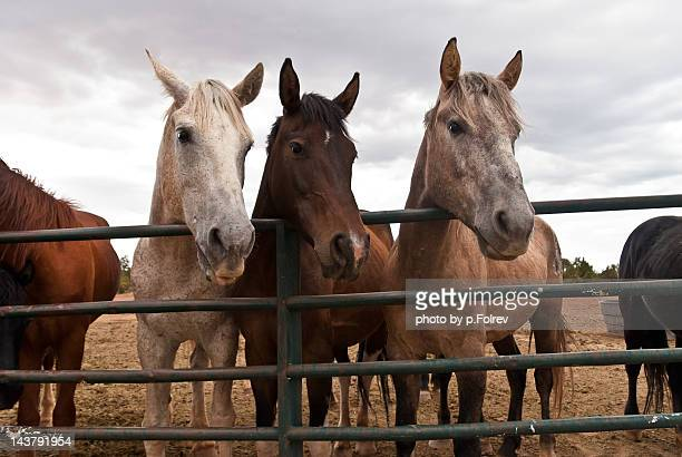 Three horses waiting for hay