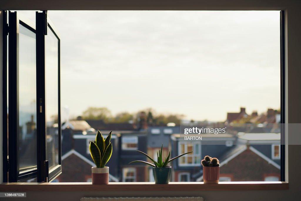Three house plants on window sill in summer : Stock Photo