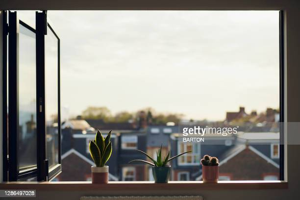 three house plants on window sill in summer - open stock pictures, royalty-free photos & images