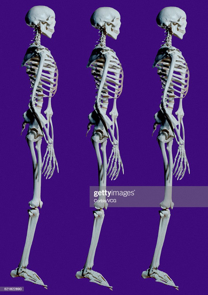 Three Human Skeletons Stock Foto Getty Images