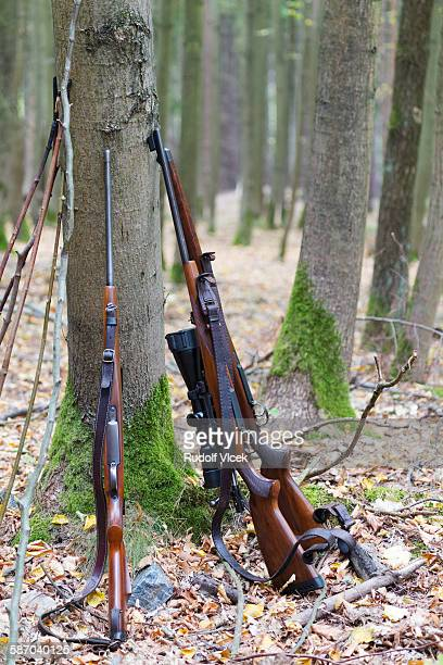 Three hunting rifles leaning on tree in forest