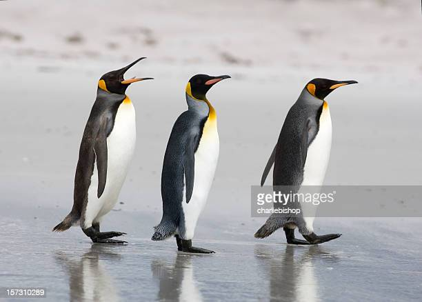 three king penguins on a beach - koningspinguïn stockfoto's en -beelden