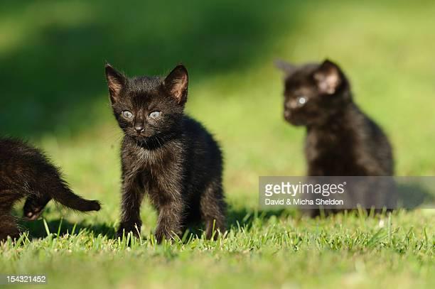 Three kittens in grass
