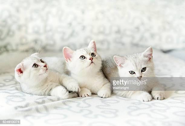 three kittens on sofa