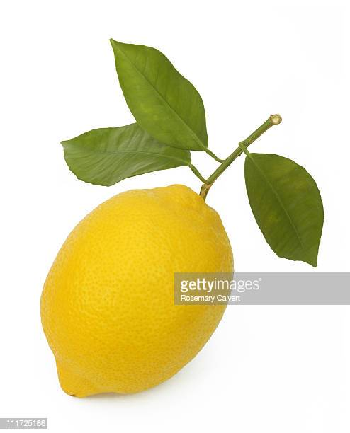 three leaves still attached to ripe lemon. - レモン ストックフォトと画像