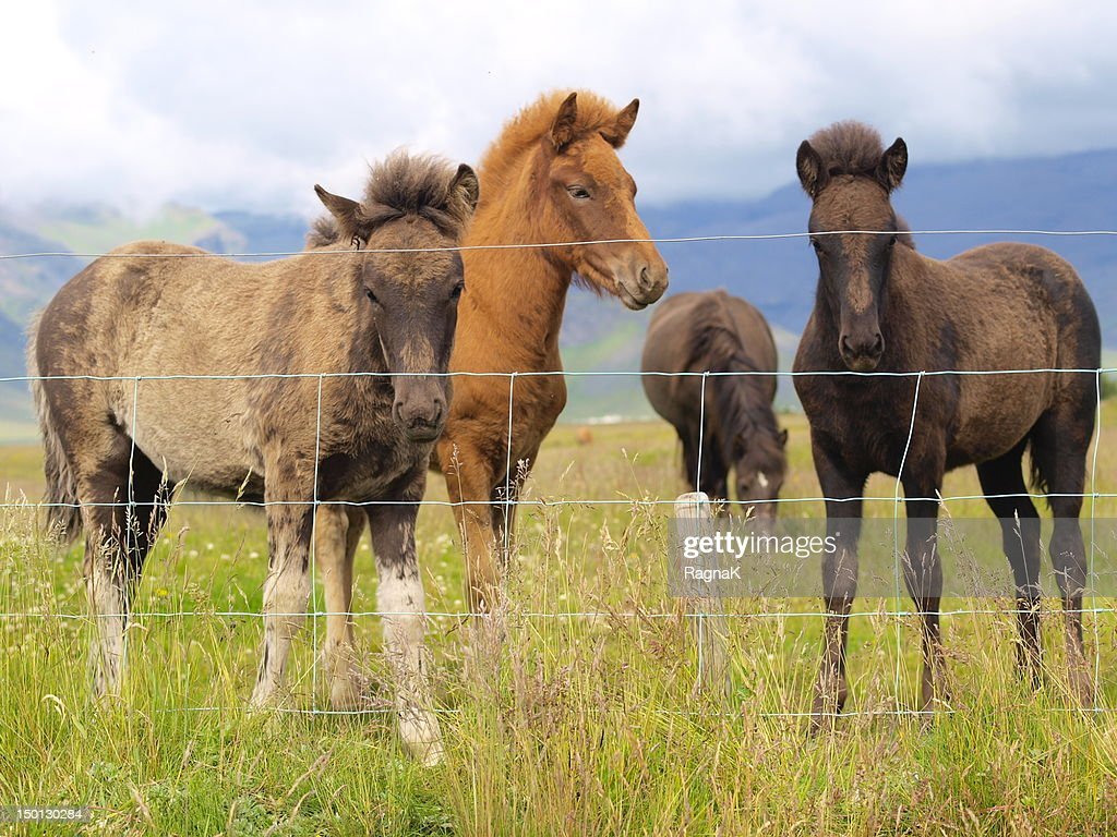 Three little foals : Stock Photo