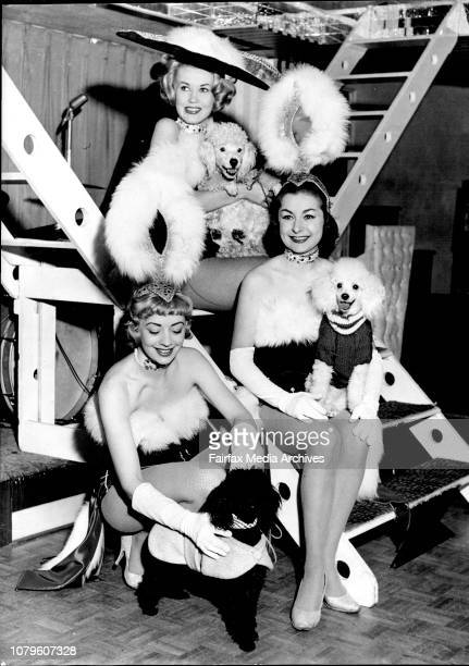 Three lonely showgirls at the Latin Quarter are always accompanied to rehearsals by the French Poodles the girls and their dogs are Ann Quinn 21 of...