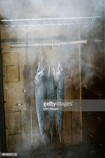 Three mackerel hanging in a fish smoker.