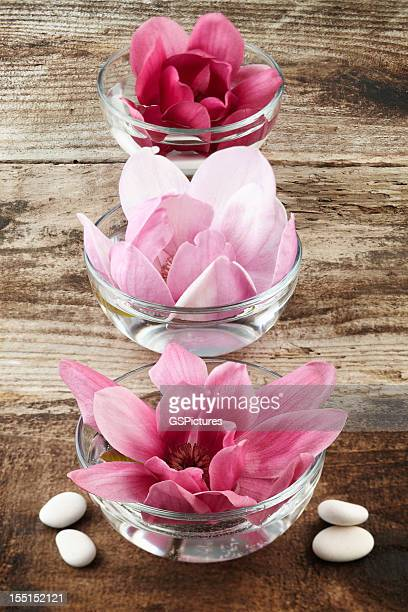 Three magnolia flowers inside bowls floating in water