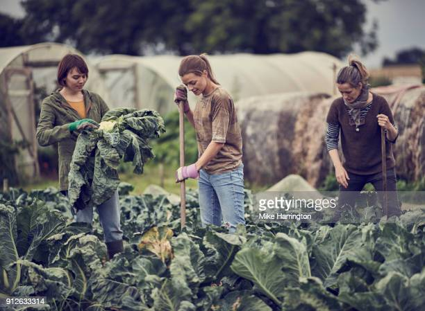 three mature females maintaining the community allotment - community garden stock pictures, royalty-free photos & images