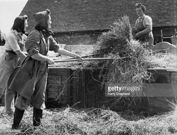 Three members of the Women's Land Army at work forking barley into a threshing machine on 16th May 1942 at Hewens Wood farm in Bradfield, Berkshire,...