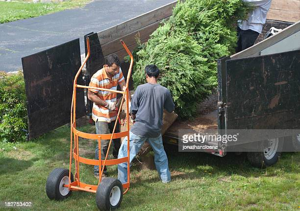 three men unloading a tree off a truck - trailer stock pictures, royalty-free photos & images