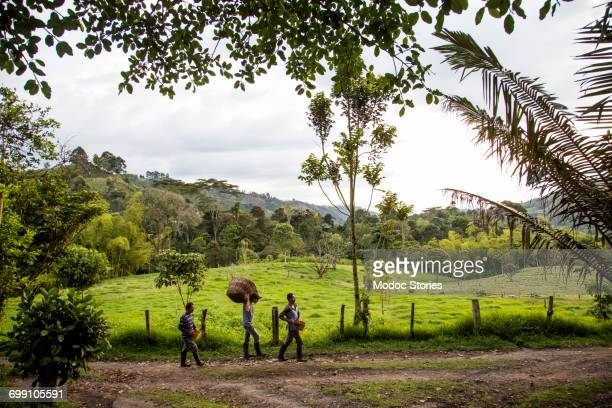 Three men walk down an empty road on a coffee farm in rural Colombia.