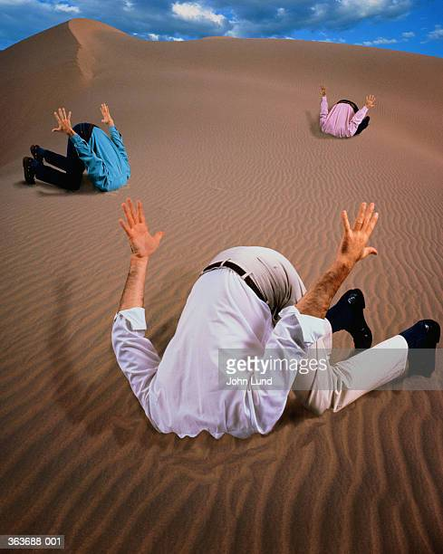 head in the sand stock photos and pictures