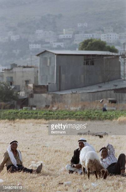 Three Middle Eastern men, each wearing a keffiyeh, sitting on the ground in a field with a grazing sheep , with farm buildings in the background n...