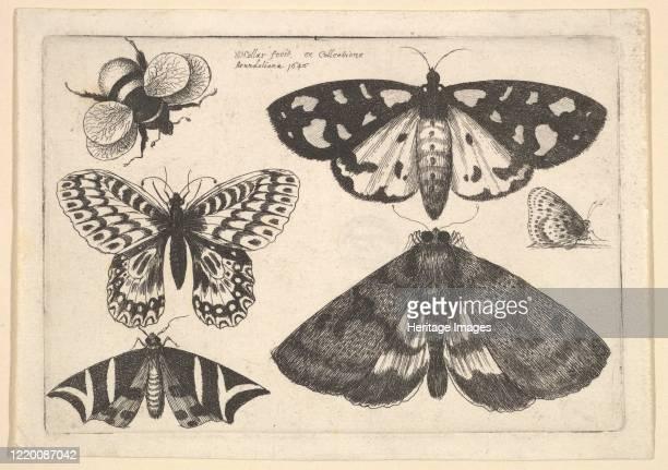 Three moths, two butterflies and a bumble bee, 1646. Artist Wenceslaus Hollar.