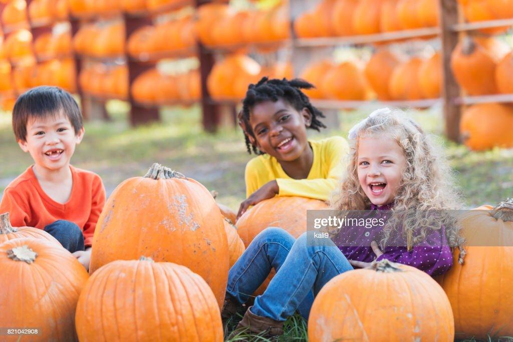 Three multi-ethnic children with lots of pumpkins : Stock Photo