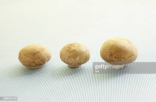 three mushrooms - newhealth stock photos and pictures