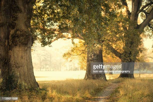 three of a kind - gelderland stock pictures, royalty-free photos & images