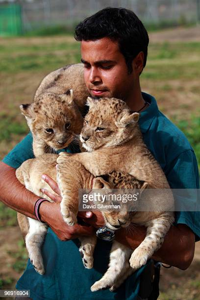 Three onemonthold lioness cubs are held by a keeper as they take their first outing on February 21 2010 at the Ramat Gan Safari Park near Tel Aviv...