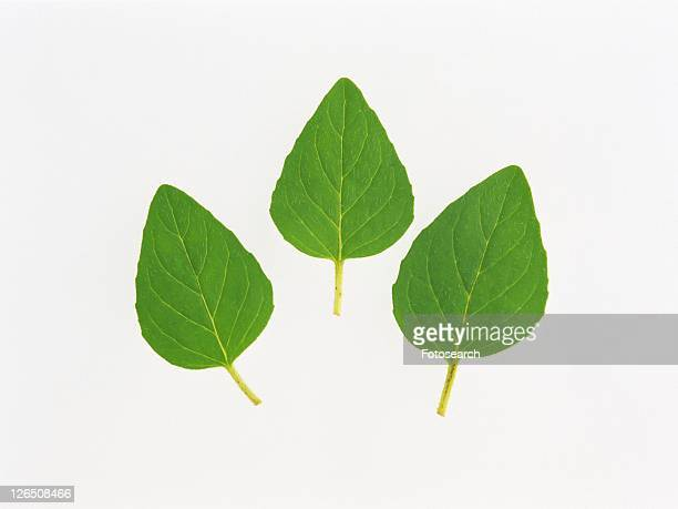 Three Oregano Leaves On a White Surface, High Angle View