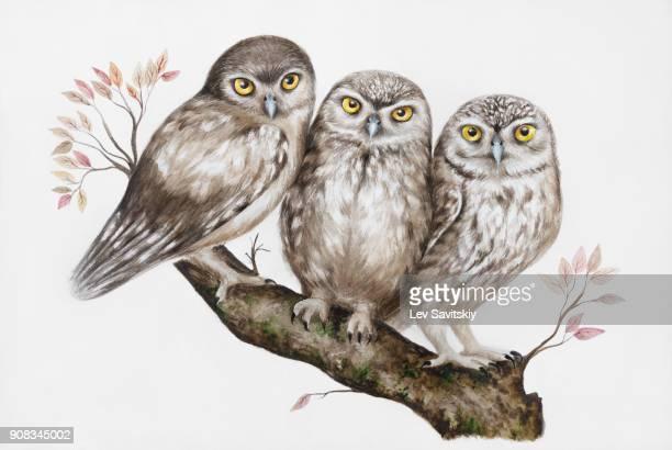 Three owls on a branch