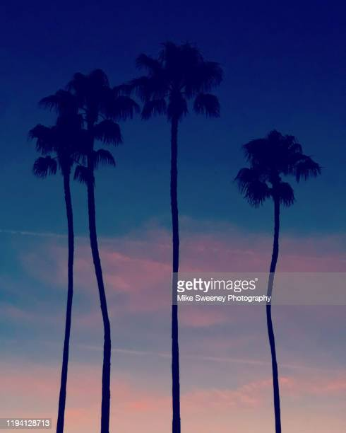 three palm trees against sunset sky - florida - orlando florida stock pictures, royalty-free photos & images