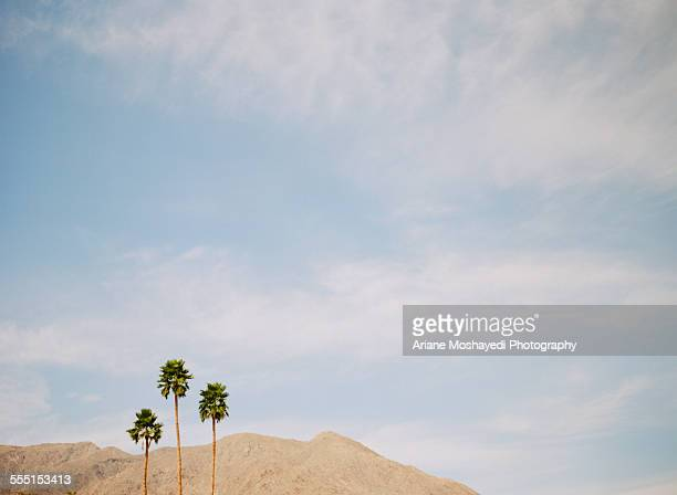 Three Palm Trees in Palm Springs
