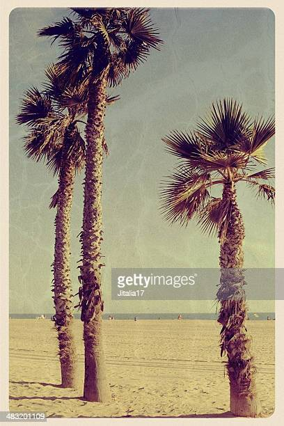three palm trees on newport beach - vintage postcard - newport ca stock pictures, royalty-free photos & images