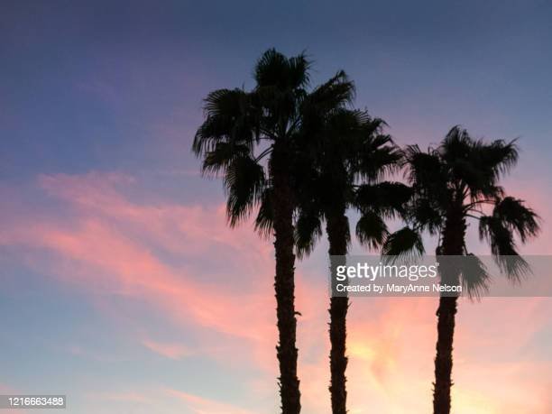 three palms standing in sunset sky - indio california stock pictures, royalty-free photos & images