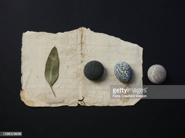 three pebbles and a eucalyptus leaf arranged on antique paper on a black background - plant part stock pictures, royalty-free photos & images