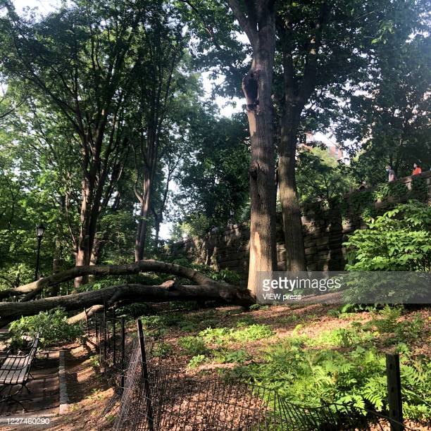 Three people get injured after a branch falls on them in Riverside Community Park in Upper West Side Manhattan on May 27, 2020 in New York City.