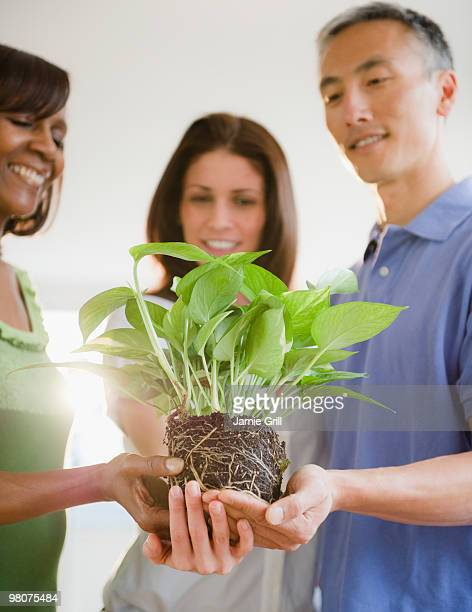 three people holding plant cupped in their hands - newhealth stock photos and pictures