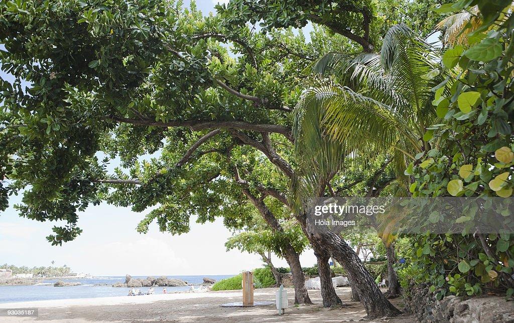 Three people walking on the beach, San Juan, Puerto Rico : Stock Photo