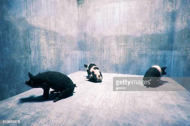 Three pigs sitting in corners