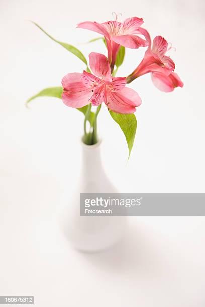 Three pink Alstroemeria lilies in a white vase