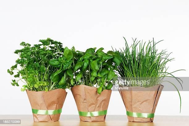 Three pots of herbs