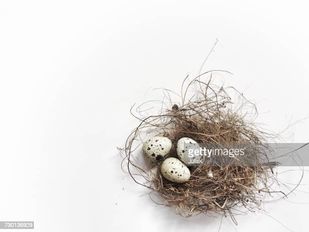 Three quail eggs in a birds nest