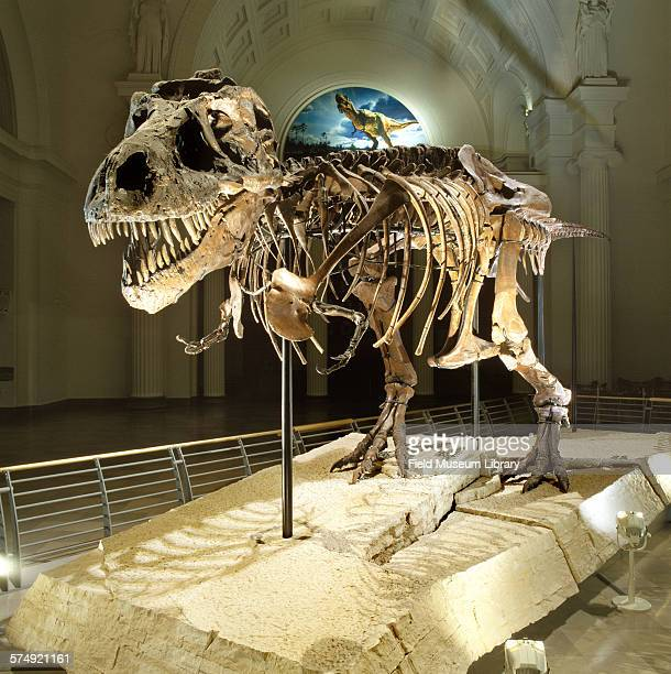 Three quarters view of the completed exhibit installation of the fossil skeleton of Sue a Tyrannosaurus Rex seen in a darkened Stanley Field Hall at...